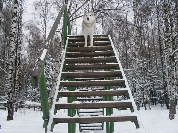 http://cs273.vkontakte.ru/u80552708/108852320/x_66abec87.jpg